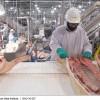 疫情或致全球肉类消费锐减 出现几十年来最大降幅