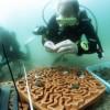 科学家开发旨在恢复珊瑚礁的3D打印人工礁盘