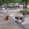 泰迪被2只机器狗调戏:当时整个狗都傻了