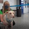 """""""准确率接近100%"""":赫尔辛基机场使用嗅探犬检测新冠病毒"""