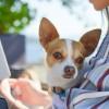 研究:宠物能帮助人类更好处理新冠封锁期间的负面情绪