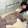 中国发现2.5亿年前九峰吐鲁番兽 首个跨热带温带分布二齿兽