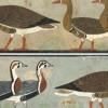 研究人员认为古埃及画作当中的一种雁已经灭绝