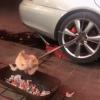 男子借助汽车后轮做旋转烤鸡:创意虽好却没有烤熟