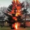 [视频]看闪电如何在让一棵树瞬间轰然倒塌