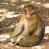 为享受日光浴?24只猴子从德国一所动物园逃出