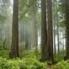 研究:美加州可能夸大了CO2总量管制与排放交易体系的成功