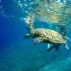 """新冠疫情对海龟保护区的深远影响——""""喜忧参半"""""""