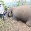 触目惊心 印度18头野象被闪电击中死亡:20年来首次