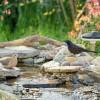 """研究人员开发Terra设备  通过分析鸟叫声来识别后院的""""访客"""""""