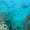Teleportal.Fish系统让用户远程控制真正访问珊瑚礁的ROV