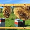 蜜蜂正在向工程师传授最佳的蜂巢设计技术