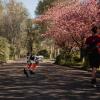 双足机器人Cassie使用机器学习完成5公里慢跑