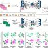 [图]借助AI,科学家可在人类细胞图谱中更快找到某个病变细胞