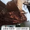 贵州拆下巨型马蜂窝:体积庞大挖到需用掘机搬运