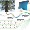 科学家利用木材打造出具有创纪录导电性的电池电解质