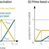 科学家比较COVID-19疫苗接种策略:什么时候一剂比两剂好?